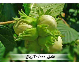 f_300_250_16777215_00_images_music_129532025957247830_1.jpg