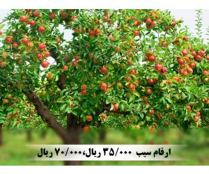 f_300_250_16777215_00_images_music_Apple-tree-with-fruit1_1.jpg