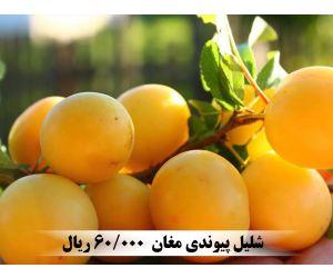 f_300_250_16777215_00_images_music_IMG10553900_1.jpg