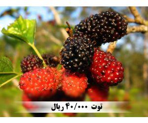 f_300_250_16777215_00_images_music_totsiah_1.jpg